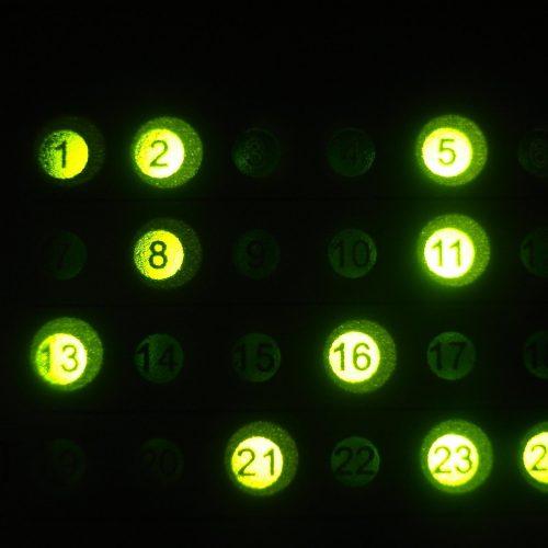 lights-4-1179033